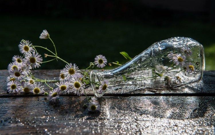цветы, ромашки, ваза, flowers, chamomile, vase