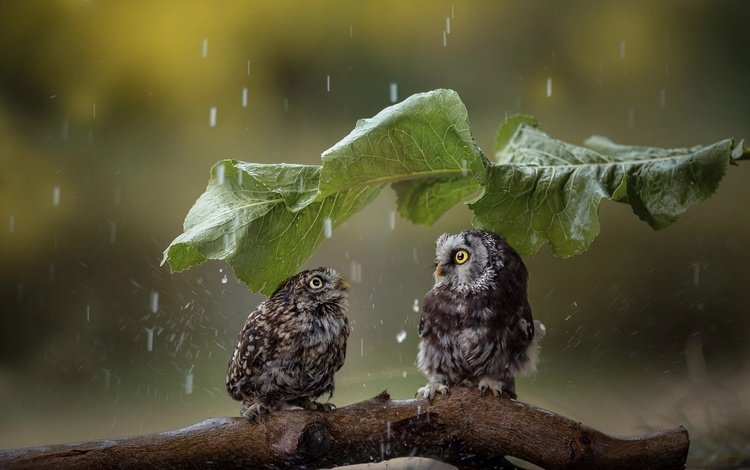 sheet, birds, rain, a couple, umbrella, snag, owls, tanja brandt