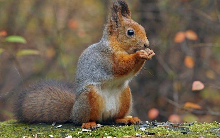 park, autumn, protein, squirrel