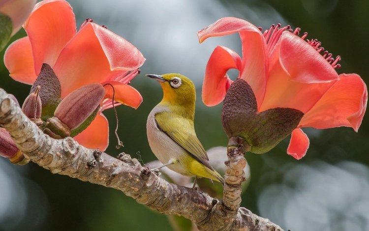 цветы, птица, flowers, bird