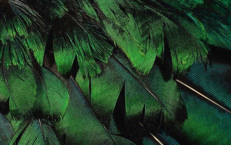 текстура, фон, перья, красиво, texture, background, feathers, beautiful