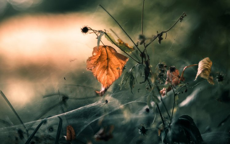 природа, растения, макро, осень, лист, паутина, mandy_h., nature, plants, macro, autumn, sheet, web