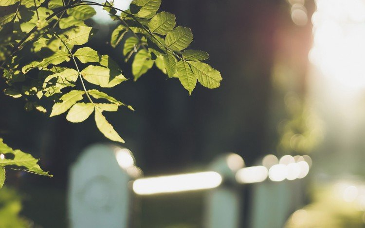leaves, macro, branches, the fence, blur, bokeh