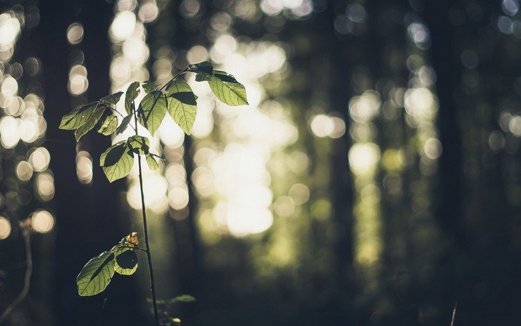leaves, macro, branches, bokeh
