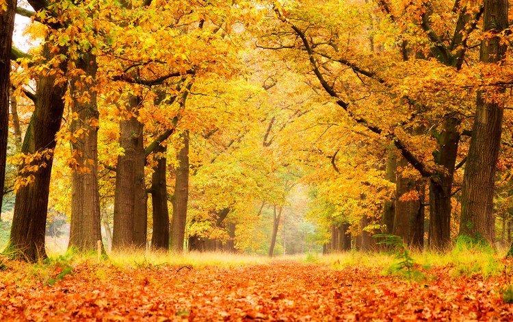 деревья, природа, лес, листья, парк, осень, trees, nature, forest, leaves, park, autumn