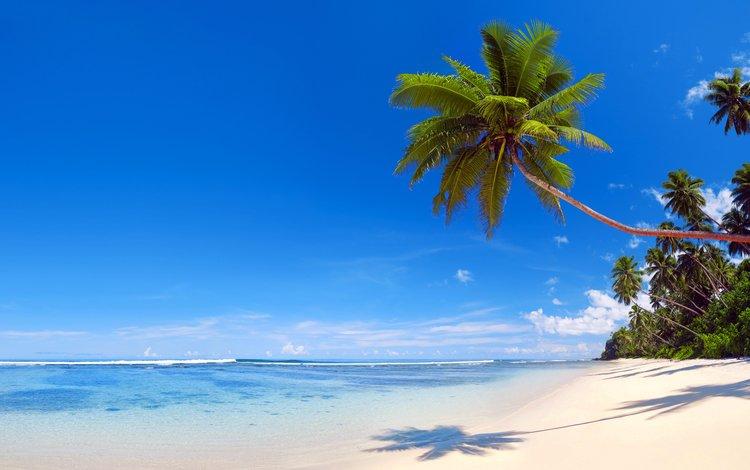 sea, beach, tropics, 14