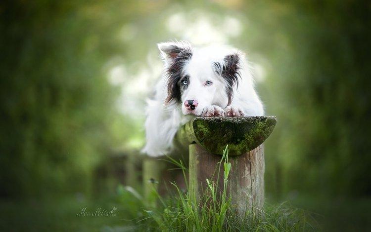 взгляд, собака, боке, look, dog, bokeh
