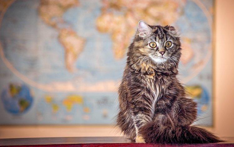 кот, мордочка, усы, кошка, взгляд, merma1d, cat, muzzle, mustache, look