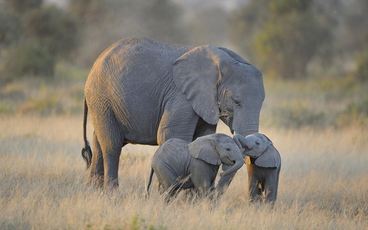 слоны, diana robinson, слонята, elephants