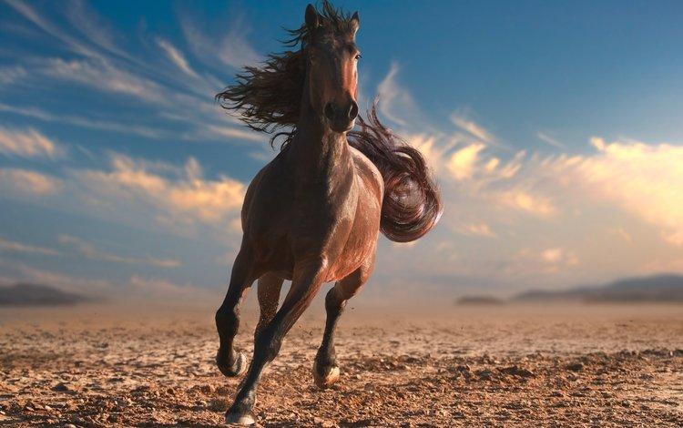 небо, лошадь, облака, пустыня, конь, грива, хвост, the sky, horse, clouds, desert, mane, tail