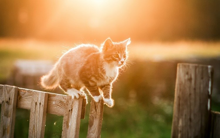кот, мордочка, усы, кошка, взгляд, забор, котенок, cat, muzzle, mustache, look, the fence, kitty