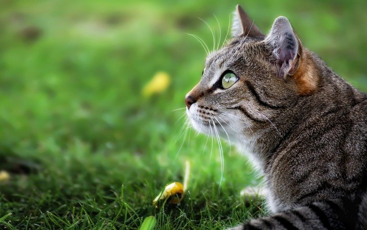 трава, кот, мордочка, усы, кошка, взгляд, профиль, martin schaefer, grass, cat, muzzle, mustache, look, profile
