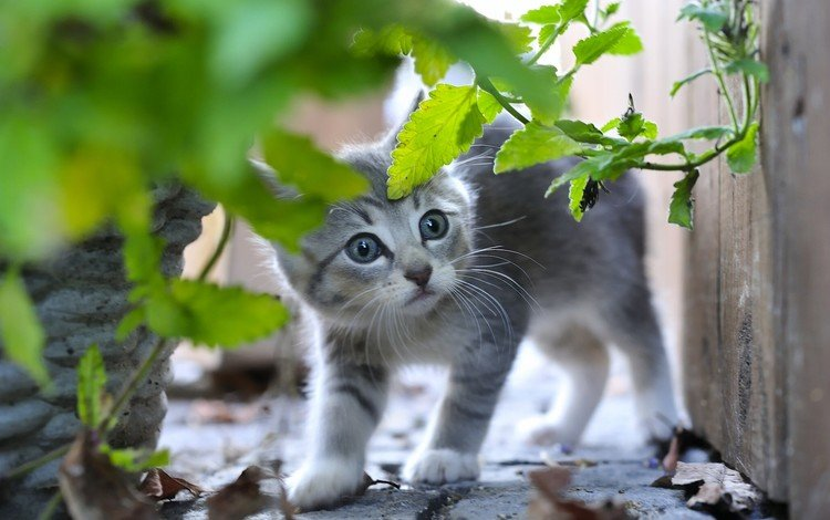 листья, кот, мордочка, усы, кошка, взгляд, котенок, leaves, cat, muzzle, mustache, look, kitty