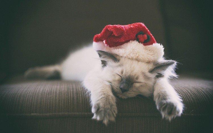новый год, кошка, котенок, колпак, new year, cat, kitty, cap