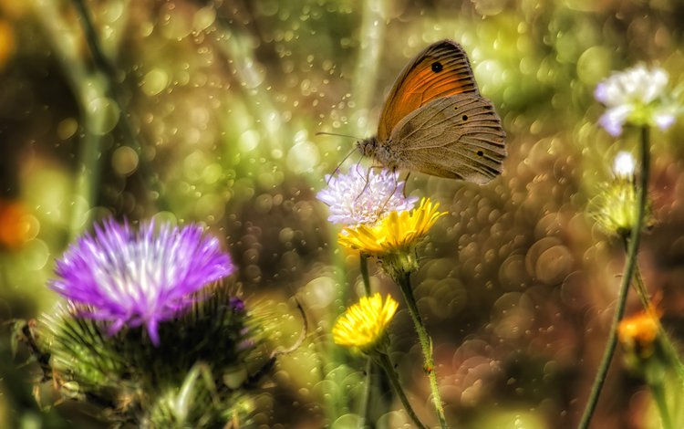 цветы, насекомое, бабочка, крылья, блики, theophilos papadopoulos, flowers, insect, butterfly, wings, glare