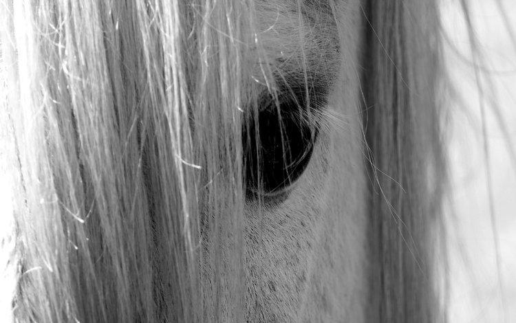 лошадь, взгляд, чёрно-белое, глаз, конь, грива, nino plutino, horse, look, black and white, eyes, mane