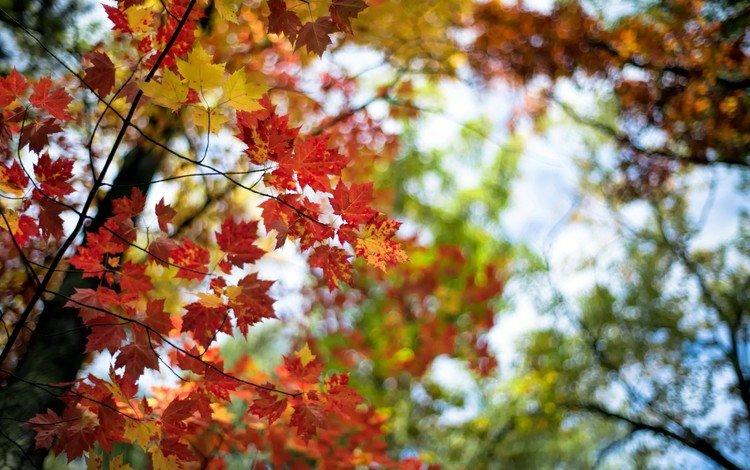листья, макро, ветки, осень, leaves, macro, branches, autumn