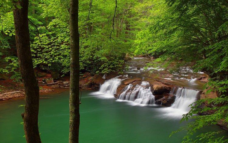 деревья, река, природа, лес, водопад, trees, river, nature, forest, waterfall