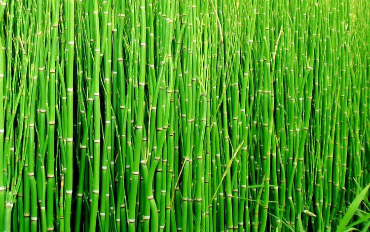 макро, бамбук, стебли, macro, bamboo, stems