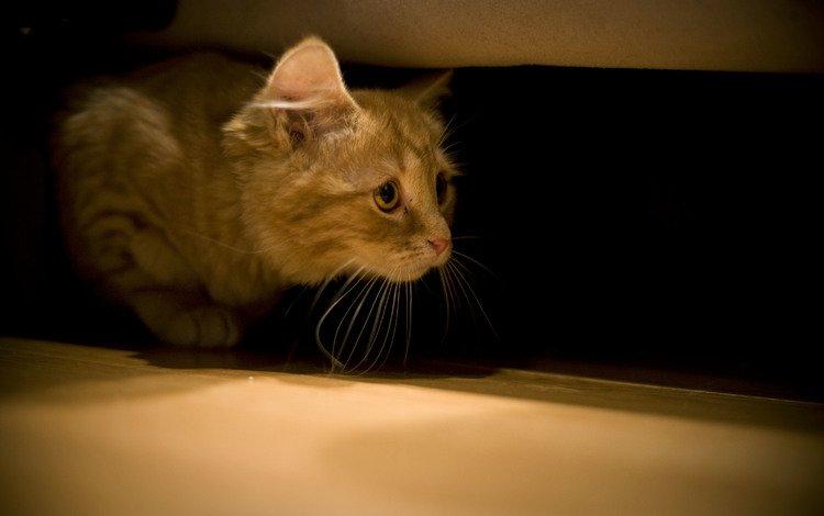 кот, мордочка, усы, кошка, взгляд, кровать, cat, muzzle, mustache, look, bed