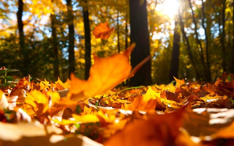 trees, nature, forest, leaves, macro, landscape, autumn