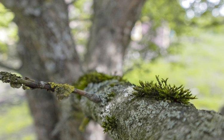 nature, tree, blur, moss, bark, branch