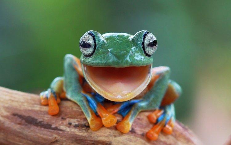 глаза, фон, размытость, лягушка, лапки, боке, eyes, background, blur, frog, legs, bokeh