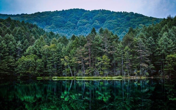 деревья, озеро, природа, лес, отражение, водоем, trees, lake, nature, forest, reflection, pond