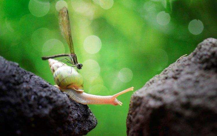 макро, насекомое, стрекоза, улитка, macro, insect, dragonfly, snail