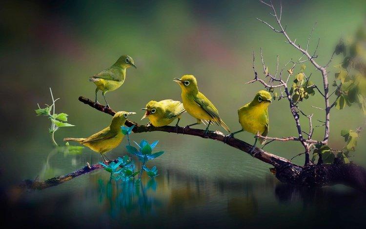 вода, ветка, природа, листья, птицы, клюв, перья, белоглазка, water, branch, nature, leaves, birds, beak, feathers, white-eyed