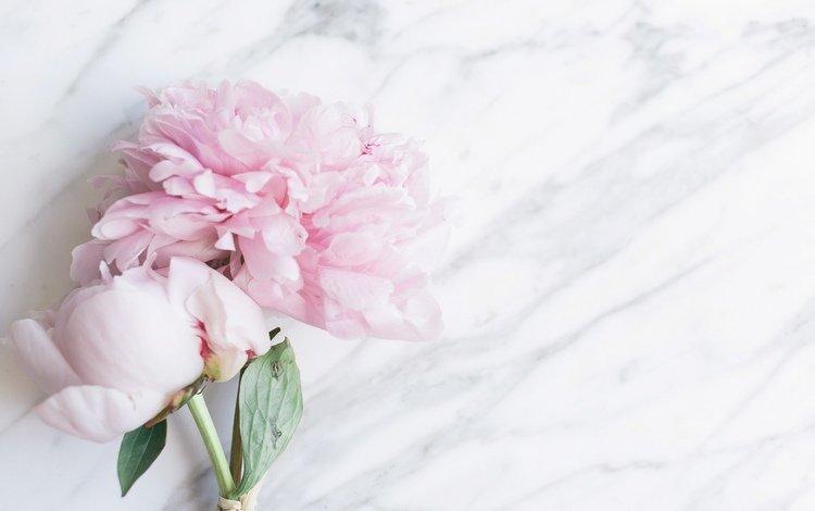 цветы, букет, мрамор, пионы, пинк, тендер, flowers, bouquet, marble, peonies, pink, tender