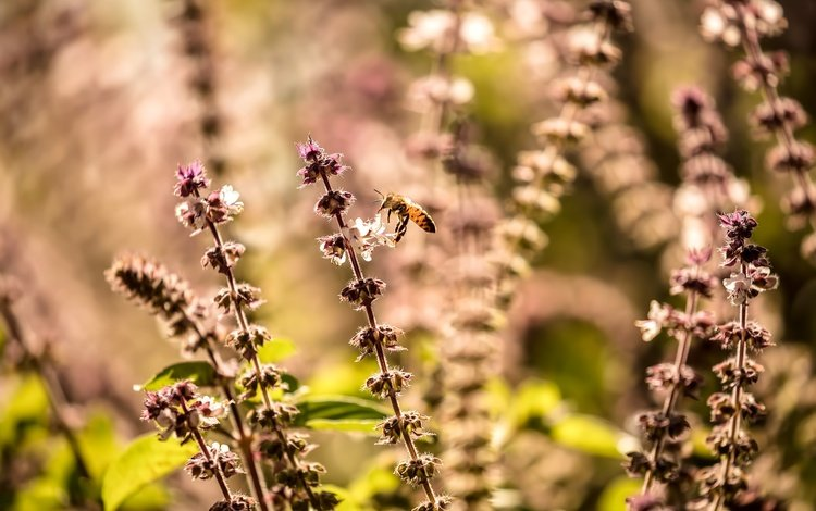 природа, растения, макро, насекомое, размытость, пчела, полевые цветы, nature, plants, macro, insect, blur, bee, wildflowers