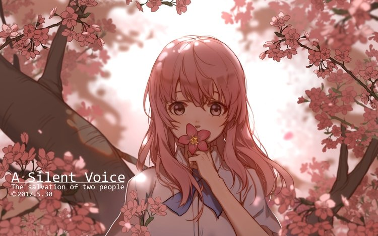 девушка, взгляд, волосы, лицо, cherry blossom, розовые волосы, nishimiya shouko, koe no katachi, girl, look, hair, face, pink hair