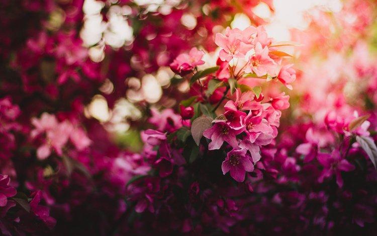 свет, цветы, ветка, цветение, весна, вишня, light, flowers, branch, flowering, spring, cherry