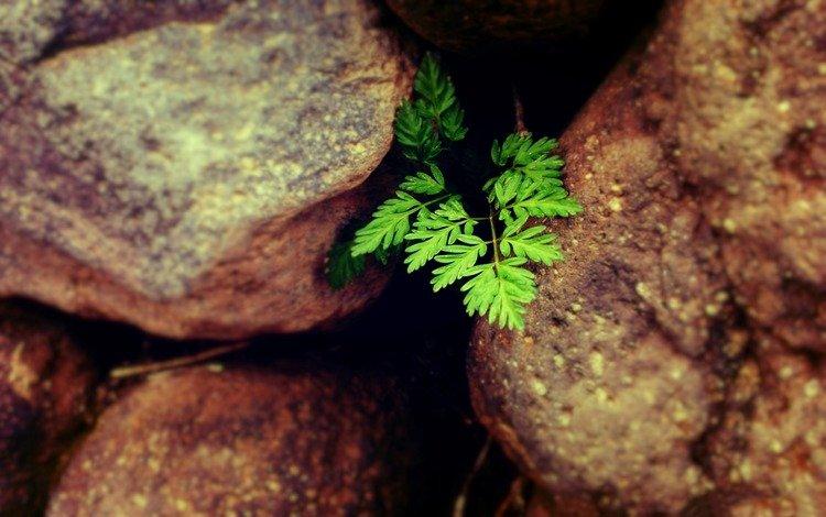 nature, stones, plant, leaves