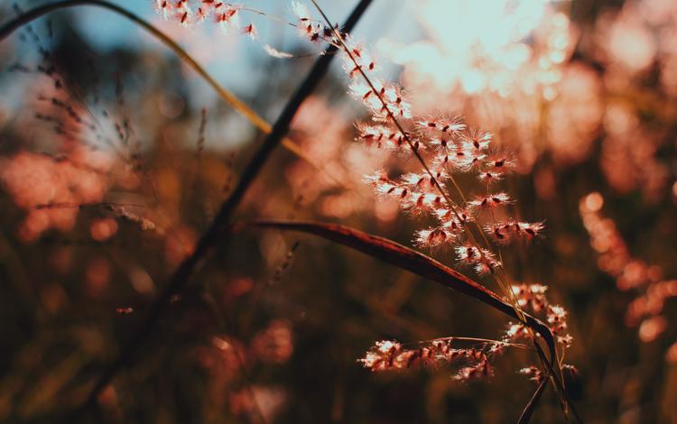 light, branch, nature, macro, plant