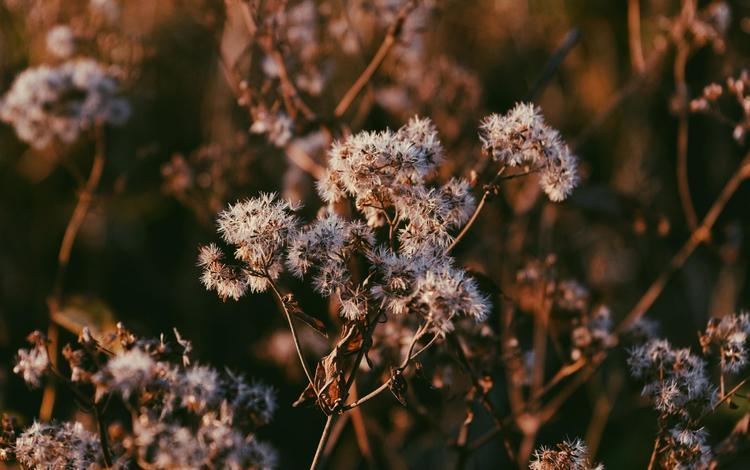 branch, nature, macro, stems, plant, dry