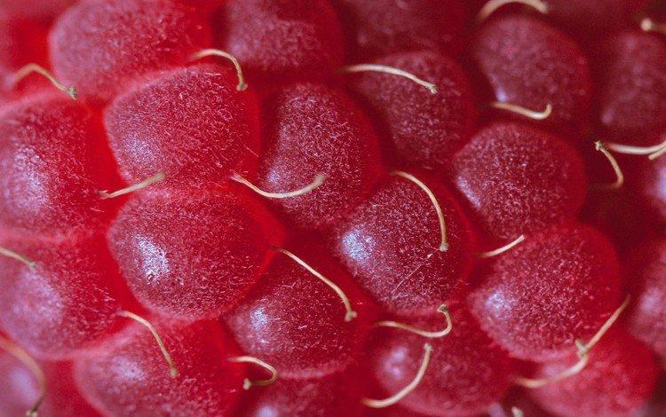 малина, ягода, крупным планом, raspberry, berry, closeup