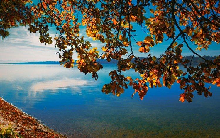 небо, природа, дерево, берег, листья, ветки, горизонт, осень, the sky, nature, tree, shore, leaves, branches, horizon, autumn