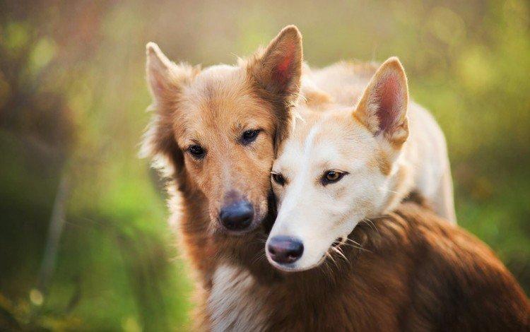 look, blur, pair, friends, dogs, faces