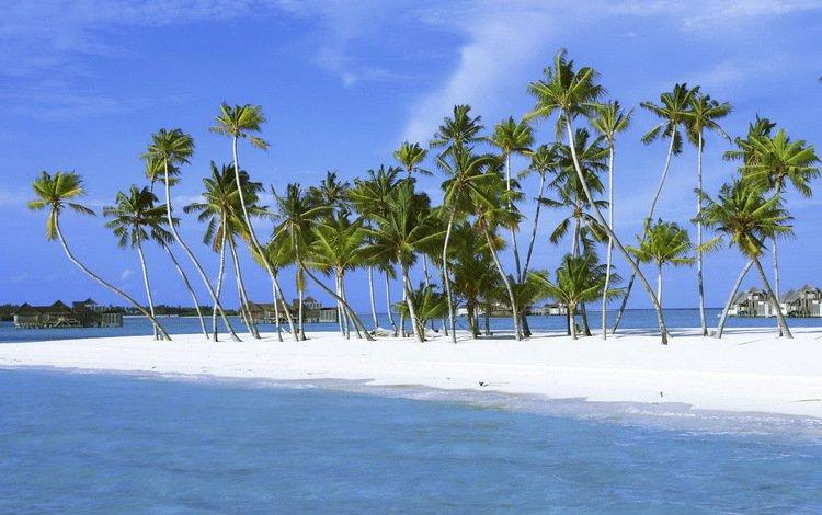 sand, palm trees, island