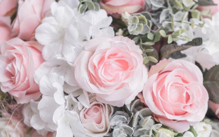 цветы, бутоны, розы, лепестки, розовые, белые, flowers, buds, roses, petals, pink, white