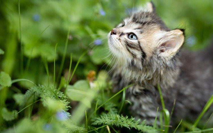 трава, мордочка, взгляд, котенок, малыш, grass, muzzle, look, kitty, baby