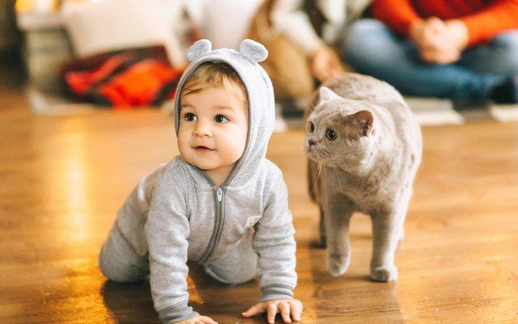 кот, ребенок, малыш, cat, child, baby