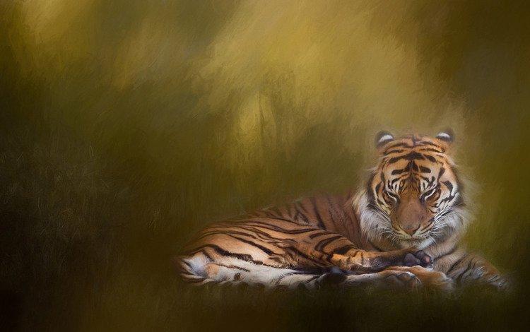 tiger, texture, background, cat, treatment, wild cat