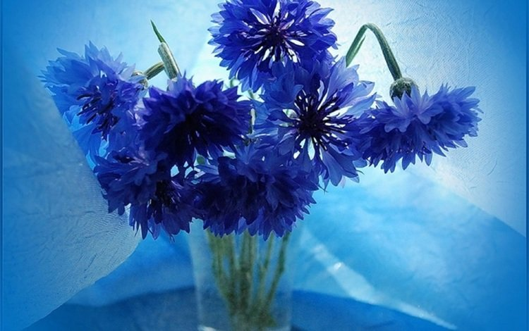 flowers, vase, bouquet of cornflowers