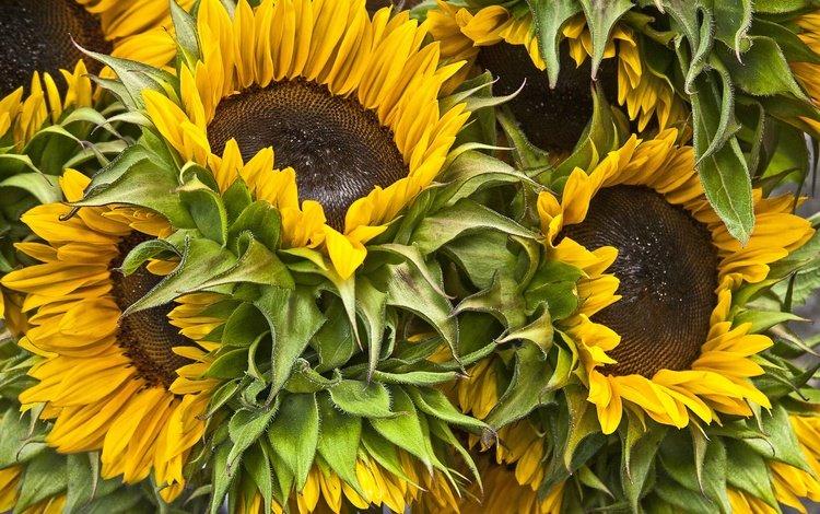 flowers, bouquet, sunflowers