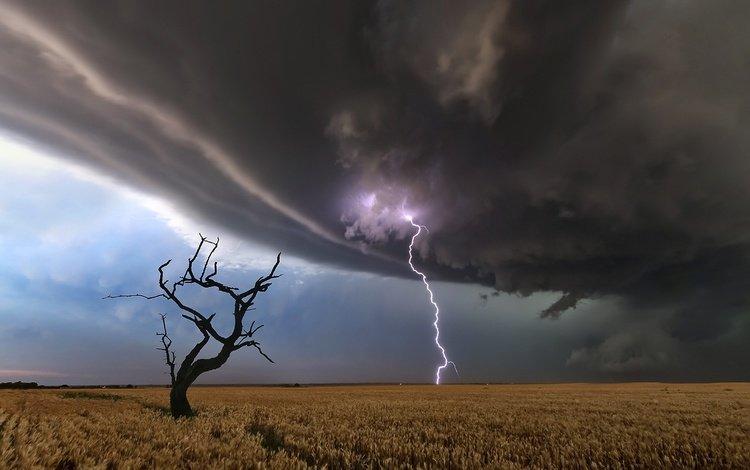 дерево, молния, поле, tree, lightning, field