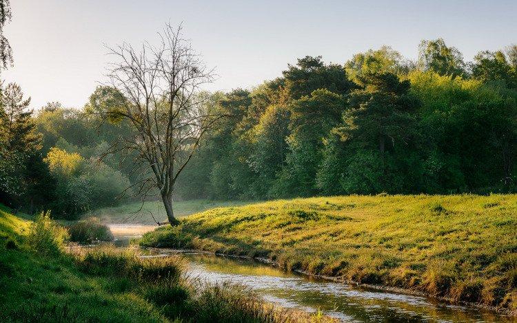 река, природа, дерево, весна, river, nature, tree, spring