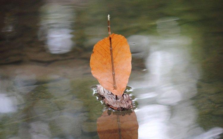 autumn, leaf, puddle, sail